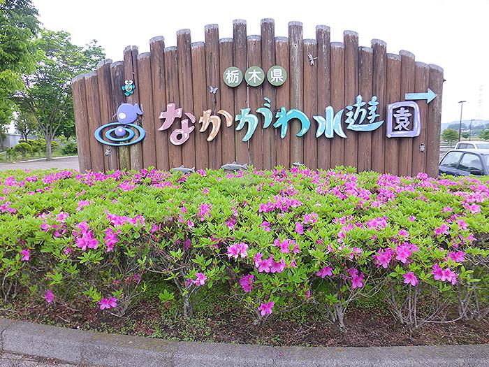 栃木県唯一の水族館 なかがわ水遊園 で遊んできた。ベビ連れでも大丈夫! - クラーケンハック
