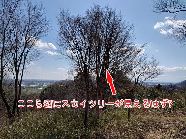 かかしの里 三景平 スカイツリー