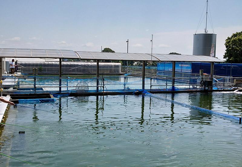 小山市 遊水園 oyama-water-park 釣り堀